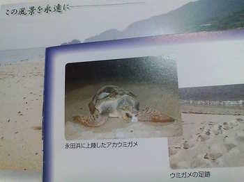 20090518 39いなか浜ウミガメ産卵地2.jpg