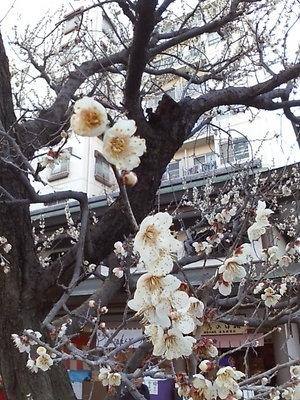 20100220 湯島天満宮10.JPG