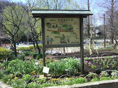 20100327 赤塚溜池公園.JPG