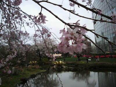 20100328 六本木アート6ヒルズ毛利庭園桜1.JPG