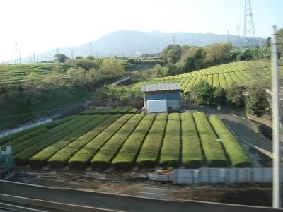 20100429 静岡茶畑.JPG