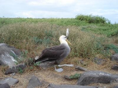 20100505 1エスパニョーラ島24.JPG