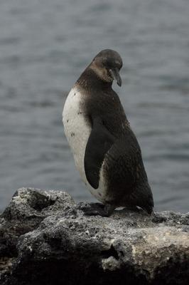 20100506 ペンギン.jpg