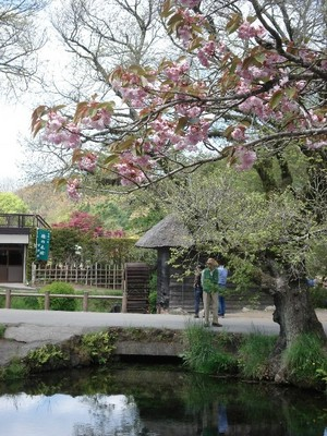 20100516 2忍野八海5湧池.JPG