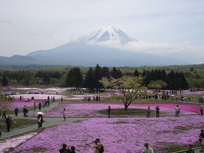 20100517 4富士芝桜まつり23s.JPG
