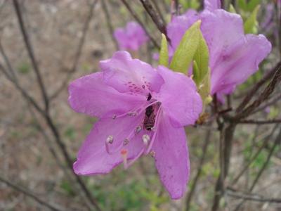 20100517 4富士芝桜まつり37.JPG