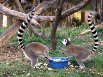 20100819 6アンタナナリヴ1ツィムバザザ動植物園7.JPG