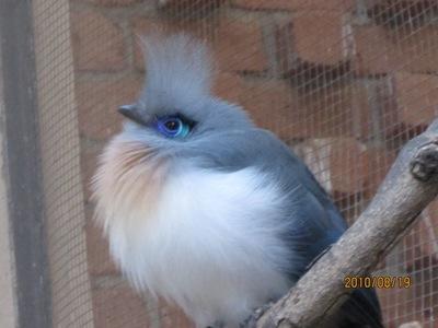 20100819 6アンタナナリヴ1ツィムバザザ動植物園8.JPG