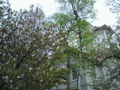 20110512 3時計台と桜.jpg
