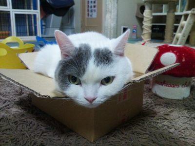 20120524 猫のまほう4.JPG