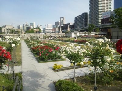 20120530 中之島バラ園10.JPG