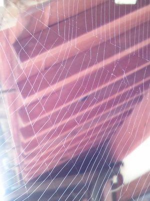 20120715 蜘蛛の巣.JPG