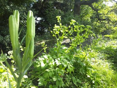 20121013 旧芝離宮庭園5.JPG